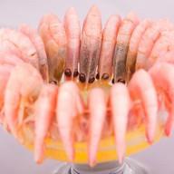 Креветки отварные Фото