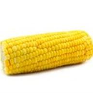 Кукуруза в початках Фото